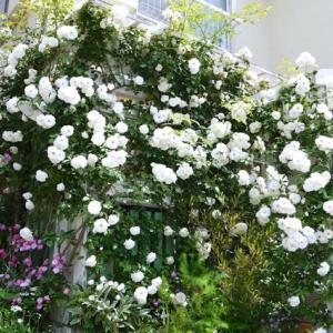 バラの庭を訪問 part 3