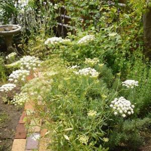 梅雨色の庭