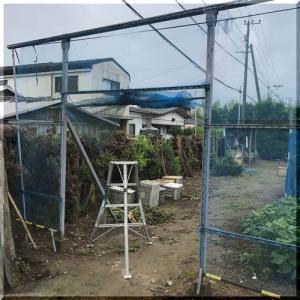 野菜畑のネット