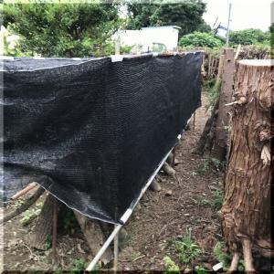 椎茸原木の保護