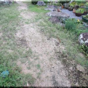 庭の草削り