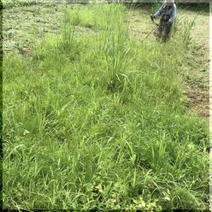 休耕田の草刈り