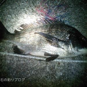 良型チヌにグレ6枚!楽しい秋の釣り@大蔵海岸