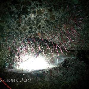ダンゴ釣り研究とチヌ37cm!