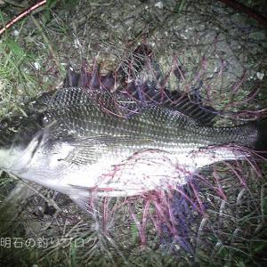 チヌ38.5cm頭に8枚釣れました!