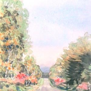 去年の秋・八千穂白樺自然林