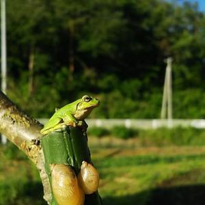 ぴっき(盛岡の方言でカエル)とカタツムリ