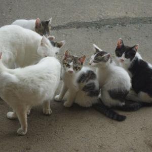 この子猫たちを里親に出す予定・・まず手始めに慣れさせることに