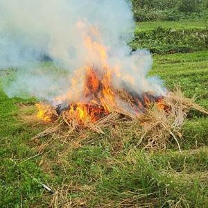 ブロッコリーの残骸燃やしました・・・・ワン・・🐩