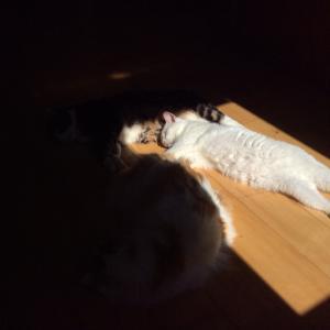独占する猫&テキサストースト。