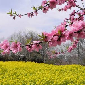 3月におすすめの登山 雪山から春の花旅ハイキング