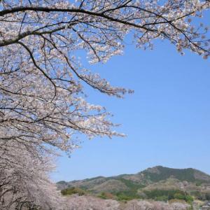 【奥武蔵】天覧山~巾着田~日和田山 満開の桜とツツジの登山