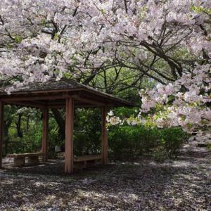 【沼津アルプス縦走】香貫山~鷲頭山~大平山 満開の桜と海の展望登山
