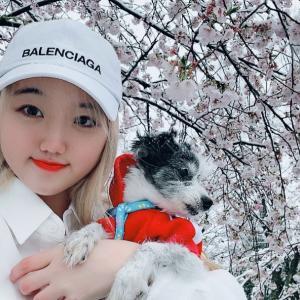 【MINAMI일본인】雪桜