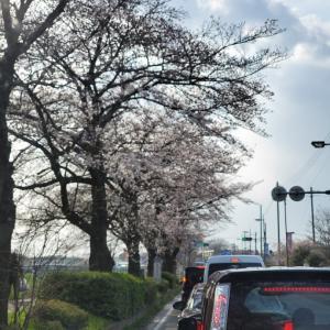 2020.03.22 桜