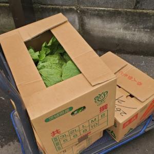 2020.04.27 お野菜