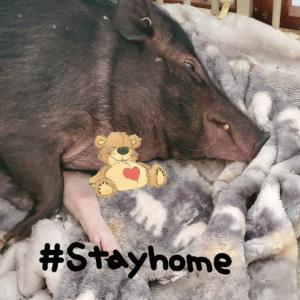 2020.05.10 StayHome
