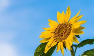 暑い夏を楽しむ  人生が変わるスピリチュアル12ステップ講座