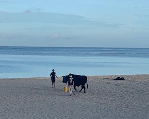 牛のあとは、ダブルレインボー「卒業」「祝福」 「七福神の恵み」