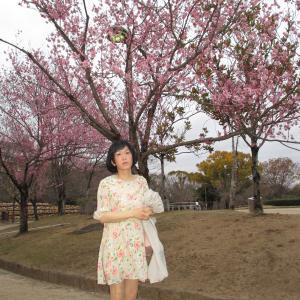 新しいカメラで、ちょっとだけ撮影(姫路城の桜)