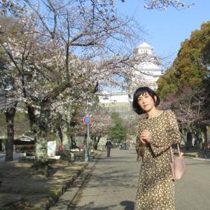 姫路城の桜(一昨日の朝ですが)