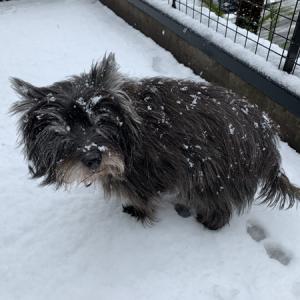 引きこもりからの雪