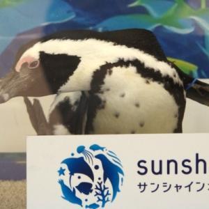 サンシャイン水族館の年パスイベント「感謝フェア」二日目