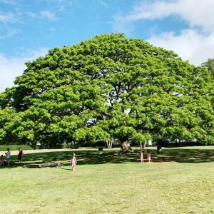 子連れハワイ~その5 3日目 この木なんの木からのアウラニ~