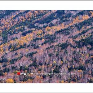 晩秋の山肌