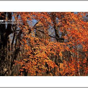 流れる落ちる秋