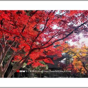 武蔵野の紅葉  VOL.03
