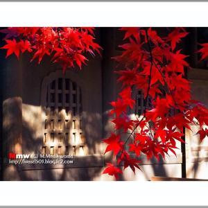 武蔵野の紅葉  VOL.04