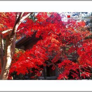 武蔵野の紅葉  VOL.05 最終回