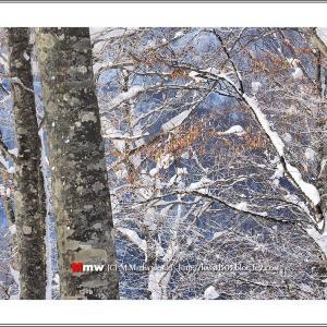 真冬の森にて