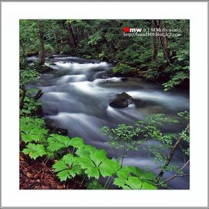 渓流の響き