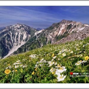 雲上のお花畑