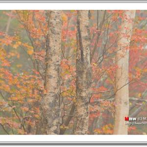 初秋の彩画