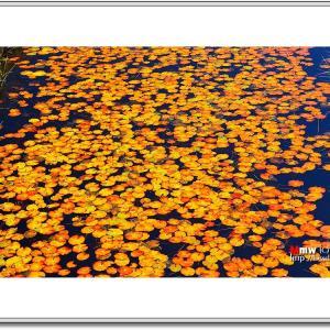 秋色に染まる池塘