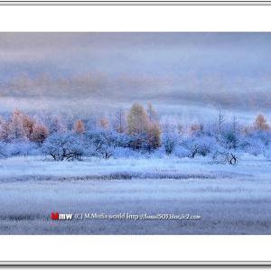 降霜の湿原