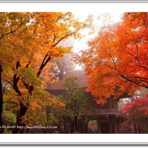 朝靄に煙る平林寺