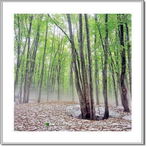遅春の美人林