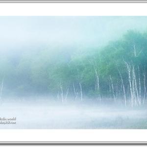 朝靄立ち込める森
