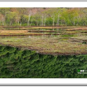 深緑の湿原