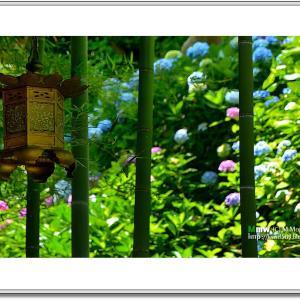 紫陽花と灯籠