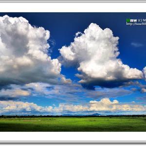 夏雲と陰影の葦原