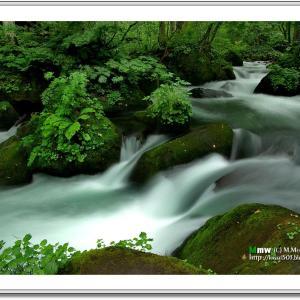 涼を求める緑彩の渓流