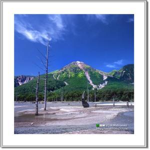 立ち枯れの木と焼岳