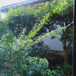 庭の木の断捨離
