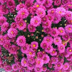 花が綺麗でした
