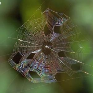 蜘蛛の糸~(≧∇≦)/